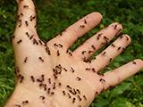 ants-4239_640_160